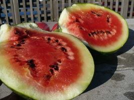 SHIPPED FROM US 110 Sugar Baby Watermelon Edible Fruit Seeds, GS04 - $17.00