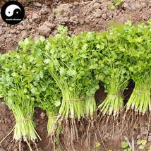 Buy Cilantro Seeds Plant Spices Vegetables Parsley Coriandrum Sativum - $5.99