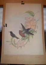 Authentic PAIR ORIGINAL J GOULD OVERSIZED IRIDESCENT BIRD PRINTS Priced ... - $544.98