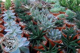 "Mini Terracotta Succulents - 2"" Pots - Cactus, Haworthia, Aloe, Mix - We... - $4.00"