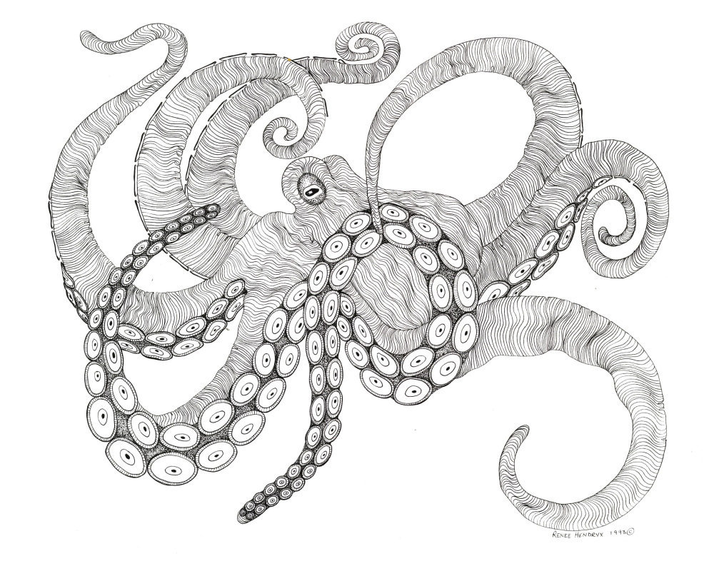 Octopus, Pen and Ink, Framed Matted Sea Life Art Print Art Drawing