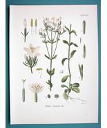 CENTAURY GENTIAN Medicinal Gentiana Centaurium - Beautiful COLOR Botanic... - $15.26