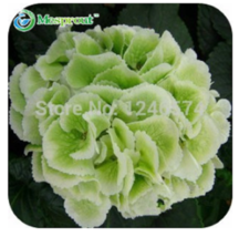Hydrangea seeds, potted balcony, budding rate of 95% - 30pcs/pack - Color 5 - $7.90