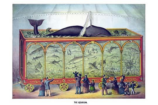The Aquarium by Gibson & Co. - Art Print - $19.99 - $179.99