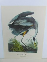 Great Blue Heron (Ardea Herodias) Bird 9x12 Frameable Print Ornithology ... - $9.79
