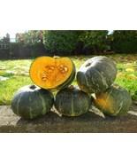 Organic Kabocha Squash - Japanese Pumpkin - 15 Seeds - $8.99