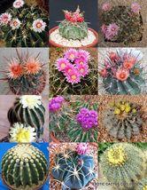 FEROCACTUS MIX rare flowering cactus exotic cacti desert succulent seed 20 seeds - $18.00
