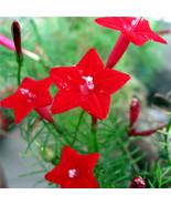 50 Cardinal Climber Vine Red Flower Seeds Quamoclit - $2.41
