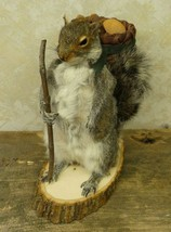 Hiking Squirrel Professional Taxidermy Mounted Animal Statue Home &Offic... - $264.99