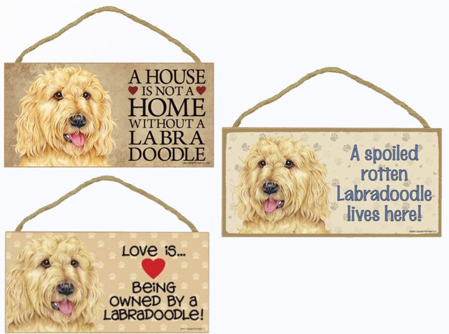 """Labradoodle Blonde Dog Sign Plaque 10""""x5"""" House not Home Spoiled Love"""