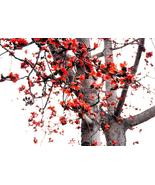30pcs Very Admirable Bombax ceiba Seeds Cotten Tree Red Silk-cotton Tree... - $15.99