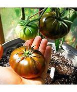 PaulRobeson Tomato Seeds Plant Seeds Garden Seeds 150 Seeds tkomguy - $28.70