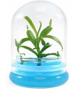 Nepenthes,Pitcher Plant, Carnorvious Plant Terrarium, Miniature, No Gree... - $25.73