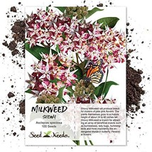 Package of 100 Seeds, Showy Milkweed Asclepias speciosa Open Pollinated ... - $7.03