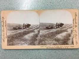 1901 harvesting reaper thresher grain horse Stereograph Stereoview Card ... - $19.99