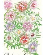 100 mg Cottage Pinks Rainbow Loveliness Seeds #MNHG - $12.50