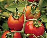 51ayz5g 8ul. sl1500  thumb155 crop