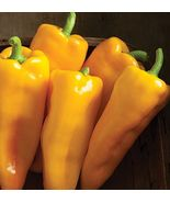 SHIP From US, 50 Seeds Escamillo Hybrid Sweet Pepper, DIY Healthy Vegeta... - $45.99