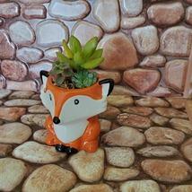 Mini Fox Planter with Succulent Arrangement, Succulent Gift, Animal Planter Pot image 3