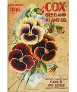Cox Seed and Plant Co. 1896  Seed Company Bright Colorful Print  Vintage Reprodu - $18.95