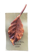 Vintage real leaf copper beech john griffin brooch pin - $49.89