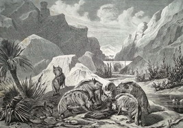 HUNTING in 19th Century Hyenas Devouring Prey - 1878 Fine Quality Print - $17.55