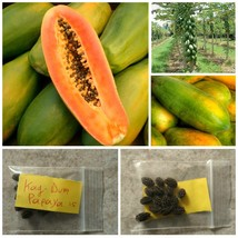 Thai Local ''Kag - Dum'' Papaya Seeds ~15 Top Quality Seeds - Tropical F... - $14.98