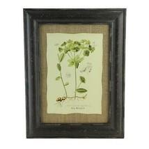 "Raz 16.5"" Botanic BeautyEuphorbia Angulata Print Burlap Framed Wall Art - $28.30"