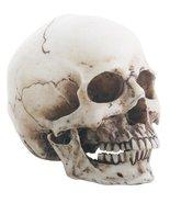 Small Cream Skeleton Skull Head Halloween Decoration Figurine - $23.31