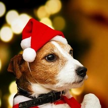 [Cute Christmas Gift] Santa Hat For Dog / Cat - $28.99