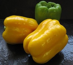 250 Seeds of Flavorburst Hybrid - Sweet Peppers - $45.05
