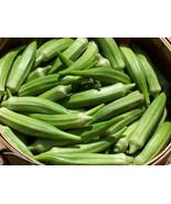 Non-GMO Clemson Spineless - 25 Okra Seeds - $8.99