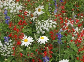 SHIP FROM US 160,000 Patriot Red White & Blue Wildflower Seed Mix, ZG09 - $74.76