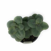"""1 Live Plant - Sedum Blue Pearl 4"""" Pot #TFPN16 - $28.99"""