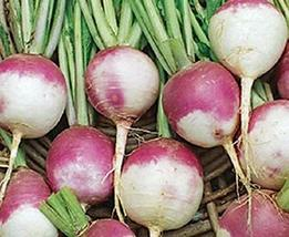 Turnip Seeds,Purple Top White Globe Turnip, Heirloom, Non GMO, 50 Seeds vegatabl - $4.49