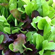 Mesclun Mix Lettuce Seeds - Mixed Greens - 100 Count Seed Pack - Non-GMO - A Tas - $2.99