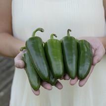 SHIP FROM US 10 Seeds Park's Whopper Jalapeno Pepper,DIY Vegetable Seeds AM - $23.99