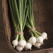 Pompeii Onion Seed , Vegetable Seeds,Ship From US - $17.00
