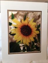 "Photograph: matted ""Sunflower"" (metallic photo paper), 11""x14"" / 7.5""x9.5"" - $16.50"