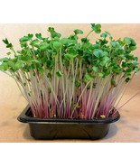 SHIP From US, 200 Seeds Red Arrow Sprouting Radish, DIY Healthy Vegetabl... - $30.99