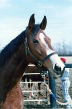 8x10 color photo of  Champion FLAWLESSLY after her retirement - $15.00
