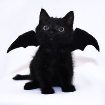 Bat wings Pet dog accessory Baby Halloween costume decoration Cute pet w... - $4.99