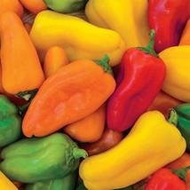 20 Mini Rainbow Pepper Mix seeds-1318 - $2.98