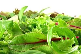 Lettuce Mixed Greens Mesclun Non GMO Heirloom Vegetable 5000 Seeds Sow No GMO US - $6.70