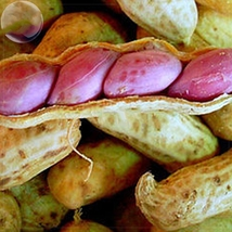 10 Jumbo Virginia Peanuts Untreated organic Arachide four seeds in a shell  - $4.22