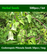 Is pilosula seeds  poor man s ginseng seeds  health care function dang shen seeds  12  thumbtall