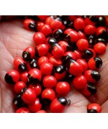 Natural Seeds Rosary Pea/Ratti/Jequirity Bean/Coral Beads Make Fashion J... - $1.97+