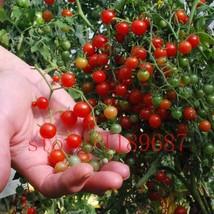 BEST PRICE 200 tomato Rare mini Tomato seeds, FS DIY Home Garden Vegetables - $8.99
