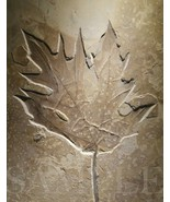 8.5X11 Ancient Fossil Leaf Picture Fine Art New Poster Print Home Decor Old Vtg - $12.16