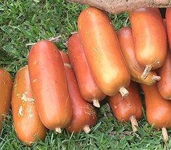 10 Seeds of Sicana Odorifera - Cassabanana - $13.85